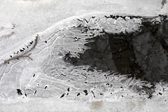 Ice formation on the brook 2 (nicoangleys) Tags: winter winterwalk annarbor michigan thearb nicholsarboretum arboretum arb