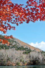 Lake Yunoko | Tochigi, Japan (Ping Timeout) Tags: lake yunoko nikkō 日光市 town city tochigi prefecture japan nikko north west season visit travel autumn fall outdoor 栃木県 unesco world heritage site national park nippon holiday 東京 日本 october 2018 vacation explore water small hill mount mountain nature maple tree red branch leaves orange colour color vivid scene scenery simplicity simple serene tranquil peace still beautiful sight view
