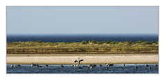 Rest area Windwatt (bavare51) Tags: kraniche windwatt pramort wasser vögel tiere düne sand natur landschaft wildlife fdz