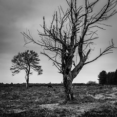 The Woe of Winter (Alex Crane MSc) Tags: moody tree bare wood bark landscape old blackandwhite monochrome horror desolate newforest fritham sunrise flat grey lone horse frame canon morning branches