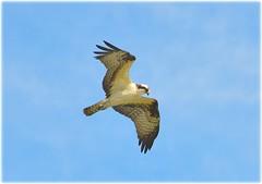 North Shore Park Beach - St Petersburg, Florida (lagergrenjan) Tags: north shore park beach st petersburg florida bird