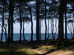 Bäume vor Ostsee (Teelicht) Tags: baddoberan balticsea deutschland germany heiligendamm küste meckpomm mecklenburgvorpommern meer ostsee wald coast forest sea bäume trees