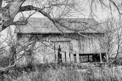 Red Barn (gabi-h) Tags: redbarn monochrome blackandwhite gabih princeedwardcounty dilapidated trees grass autumn moody sad