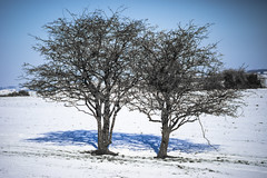 as above so below (Redheadwondering) Tags: sonyα7ii salisburyplain wiltshire winter snow landscape trees minolta minolta100200mm 119picturesin2019 88seeingdouble 88 double shadow baretrees