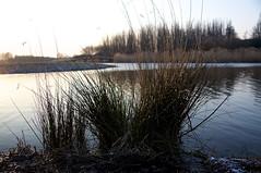 DSC06429 (janjanny) Tags: 2012 delftsehout fromaperture landscapes places seasons wildlifeandlandscapes winter