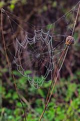 Baquiano Trail. Pacifica, CA. (j1985w) Tags: baquianotrail pacifica california rain raindrops spiderweb