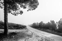 the way (Francisco (PortoPortugal)) Tags: 0422019 20151221fpbo1794 bw nb pb monochrome monocromático blackandwhite paisagem landscape árvores trees franciscooliveira