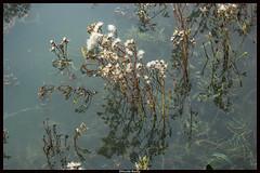 fantaisie florale (floral fantasy) (pileath) Tags: fantaisie floral fantasy transparence reflets ombres shadow flowers fleurs herbes herbs green vert