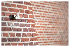 Fading walls (leo.roos) Tags: wall brick muur steen baksteen haarlem dm 2019 angénieux7015 angenieux a7rii angénieuxparisf70115 projectorlens projectionlens darosa leoroos