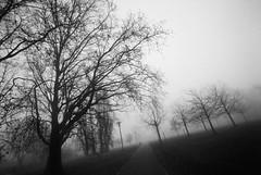 (xbacksteinx) Tags: canonef analog slr canonfd17mmf4 17mm expired film kodaktmax bwnegative december winter fog foggy city park mood moody