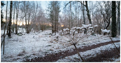 Some type of plant and snow (Eklandet) Tags: cold countries foto morning natur nature nordic photo samsung scandinavia sky snow sverige sweden uppsala frost snowwinter winter landscape sunset sunrise