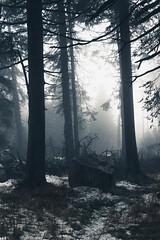 Grusel (Gruenewiese86) Tags: 2018 harz hütte november sony a6500 wald forest forestscape fog nebel angst tod tot geheimnisvoll mystisch mystical germany holz baum himmel landstrase