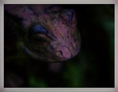 Froschkönig (BeMo52) Tags: closeup1 frog frosch gardendeco garten guseisen ironfrog macro makro pentaconauto50mmf18mc skulptur thefrogprince