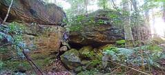 Rocks (Tony Markham) Tags: missinghamsteps budderoonationalpark kangarooriver wet slippery steep dangerous rainforest fungi fungus pleurotus