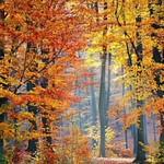 Tree Felling in Flintshire #Tree #Fellers #Flintshire... thumbnail