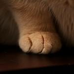 Kitten and Cat HANDBOOK thumbnail
