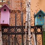 Birdboxes, Magstræde thumbnail