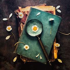 Focus on simple (Ro Cafe) Tags: helios58mmf2 nikond600 stilllife arrangement daisies flatlay flowers magnifyingglass oldbooks setup tabletop vintagelens