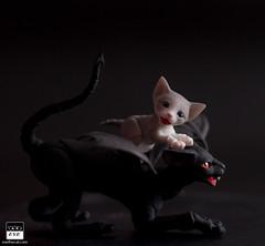 Kitten and his demon guardian (BJD Pets (dolls.evethecat.com)) Tags: bjd bjds bjdsale bjdforsale bjdoll bjddoll bjdlover bjdphoto bjdart dolls evestudiodolls artdoll dollart cat bjdpets kitty cute bjdcat
