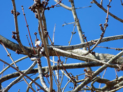 Branches. (dccradio) Tags: lumberton nc northcarolina robesoncounty outdoor outdoors outside february winter afternoon saturday saturdayafternoon goodafternoon nikon coolpix l340 bridgecamera nature natural tree trees branch branches treebranch treebranches treelimb treelimbs sky bluesky