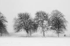 Cyclist (John (Thank you for >2 million views)) Tags: monochrome bw blancoynegro trees candidphotography streetphotography landscapephotography winterscene durdhamdowns bristol