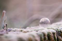Les fées font leur lessive dans une bulle de savon.. (Calamityg) Tags: ice gelée bubble bulle