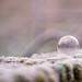 Les fées font leur lessive dans une bulle de savon..
