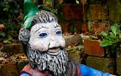 Garden Gnome (The Real Scottybabes) Tags: garden gnome