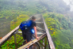 Kohala Forest Reserve, Big Island Hawaii (Joe Marcone (3.2 Million+ Views)) Tags: kohalaforestreserve hawaii bigisland max