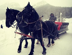 Pony Sleigh Ride (Mr. Happy Face - Peace :)) Tags: fairmount chateau hotel 25years lakelouise winter horses activities art2019 cans2s canada alberta albertabound wtbw