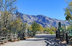 There's a lot of optimism in changing scenery, in seeing what's down the road. ~~Conor Oberst (Irene2727) Tags: desert nature catalinamountains mountains trees fences shadows pano panorama scape landscape