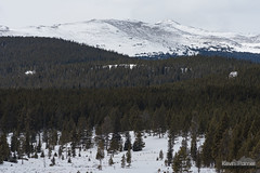 Loaf Mountain and Forest (kevin-palmer) Tags: bighornmountains bighornnationalforest wyoming nikond750 nikon180mmf28 telephoto snow snowy winter cold loafmountain clouds