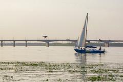 Chasing (ucrainis) Tags: duck bird boat river bridge dnipro dnieper ukraine evening summer nature animal sailboat city
