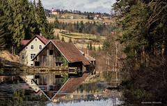 Čogrljevo jezero - krajem zime 2019. (MountMan Photo) Tags: čogrljevojezero gorskikotar primorskogoranska croatia jezero lake zima winter voda water flickrunitedaward