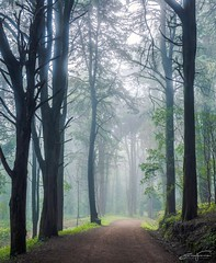 Another foggy day before the spring (jorgeverdasca) Tags: winter sunlight trees goth path mist fog forest woodland nature sintra portugal