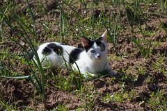 Happy Caturday (DanielaC173) Tags: cat caturday happycaturday pet