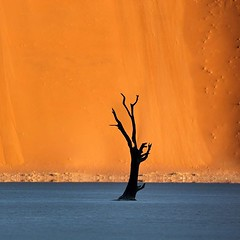 """More often than not, beauty lies in the most simple things. . Sossusvlei, Namibia. The name """"Sossusvlei"""" means """"dead-end marsh"""", owing this name to the fact that it was drainage basin without outflows for the ephemeral Tsauchab River. Most of the sandunes (Joel Santos - Photography) Tags: more often than beauty lies most simple things sossusvlei namibia the name means deadendmarsh owing this fact that it was drainage basin without outflows for ephemeral tsauchab river sandunes over 80 meters high composed 5millionyearold sands thus making namib oldest desert earth c joel santos liveforthestory joelsantosphoto namibdesert instatravelling travelholic travelguide travels travelblogger travelgram photooftheweek travellers"""
