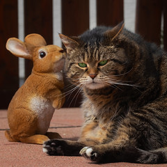 I'm stalked ! (FocusPocus Photography) Tags: cleo katze cat tabby tier animal haustier pet osterhase easterbunny