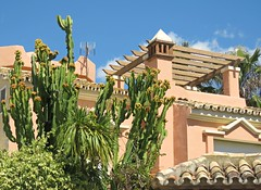 Cactus Garden! ('cosmicgirl1960' NEW CANON CAMERA) Tags: marbella spain espana andalusia costadelsol puertobanus blue sky green trees villas travel holidays yabbadabbadoo houses homes