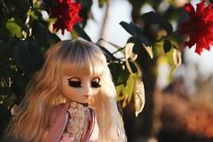 ispahan parmi les roses (Alluka Zoldyck) Tags: pullip pullips doll dolls custo custom ispahan rose flower tiphona groove