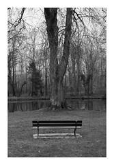 Un arbre et un banc... (DavidB1977) Tags: france îledefrance seineetmarne ferrièresenbrie fujifilm x100f monochrome bw nb arbre banc taffarette