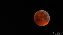 Blood Moon 05:59 (BraCom (Bram)) Tags: 0559 169 bracom bramvanbroekhoven brouwersdam goereeoverflakkee holland nederland netherlands ouddorp southholland zuidholland bloedmaan bloodmoon cold early freezing koud maan moon nacht sky stars sterren vriezen vroeg widescreen nl eclipse lunareclipse maansverduistering fullmoon vollemaan natureinfocusgroup