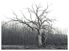 Creepy Tree (The Stig 2009) Tags: black white nature creepy naked spooky thestig2009 thestig stig 2009 2019 tony o tonyo