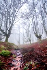 urkiola erreka 1 ART OLEO (juan luis olaeta) Tags: paisajes landscape natura forest bosque basoa hayedo pagoa fog nieblas laiñoa photoshop art urkiola