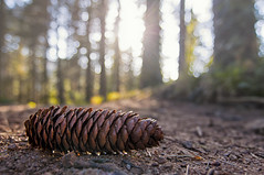 Sunset and cone under the trees (JotaBe!) Tags: cone sunset trees sunlights nature landscape espinelves masjoan arboretum path catalonia bokeh