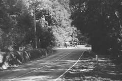 Mount Dandenong Tourist Road (7) (Matthew Paul Argall) Tags: spartus35fmodel400 35mmfilm kentmerepan100 100isofilm blackandwhite blackandwhitefilm road street mountdandenongtouristroad