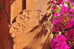 DSC_8858 (scsmitty) Tags: princegeorgewinyahchurch cemetery gravestone azaleas georgetownsc georgetown