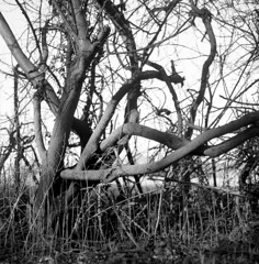 110419005 (salparadise666) Tags: rolleiflex sl66 planar 80mm fomapan 100 boxspped caffenol rs 17min nils volkmer 6x6 square medium format landscape detail tilt monochrome bw black white hannover region niedersachsen germany north german plains lowlands
