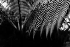 Fern (timnutt) Tags: sizergh sizerghcastle cumbria 35mm children garden xt2 bw acros monochrome lancashire mono fuji fujichrome family blackandwhite 35f2wr fujifilm