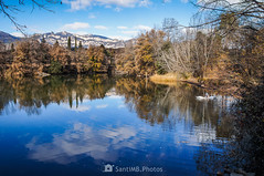Te presento a un amigo (SantiMB.Photos) Tags: 2blog 2tumblr 2ig reflejo reflection lago lake cisne swan 500px geo:lat=4206461725 geo:lon=184284942 geotagged avia cataluna españa esp